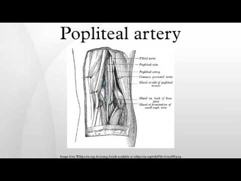 Popliteal artery - YouTube