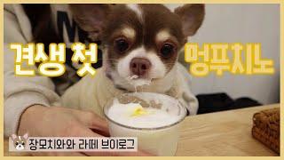 [eng]장모치와와 카푸치노 먹방???/Chihuahu…