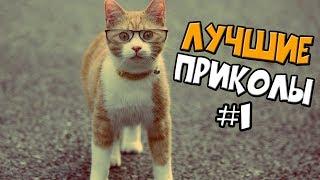 подборка приколов сентябрь 2016  12#Подборка приколов #Приколы #смех #развлечение #Not # vane #coub