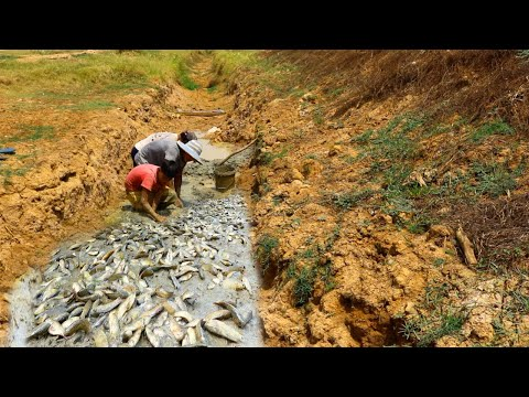 Amazing Fishing Video! Traditional Fish Catching In Canal - Best Fishing By Hands - tyriq 1256