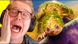 Reacting To REAL POKEMON DISCOVERED?! (Daily Dose of Internet)