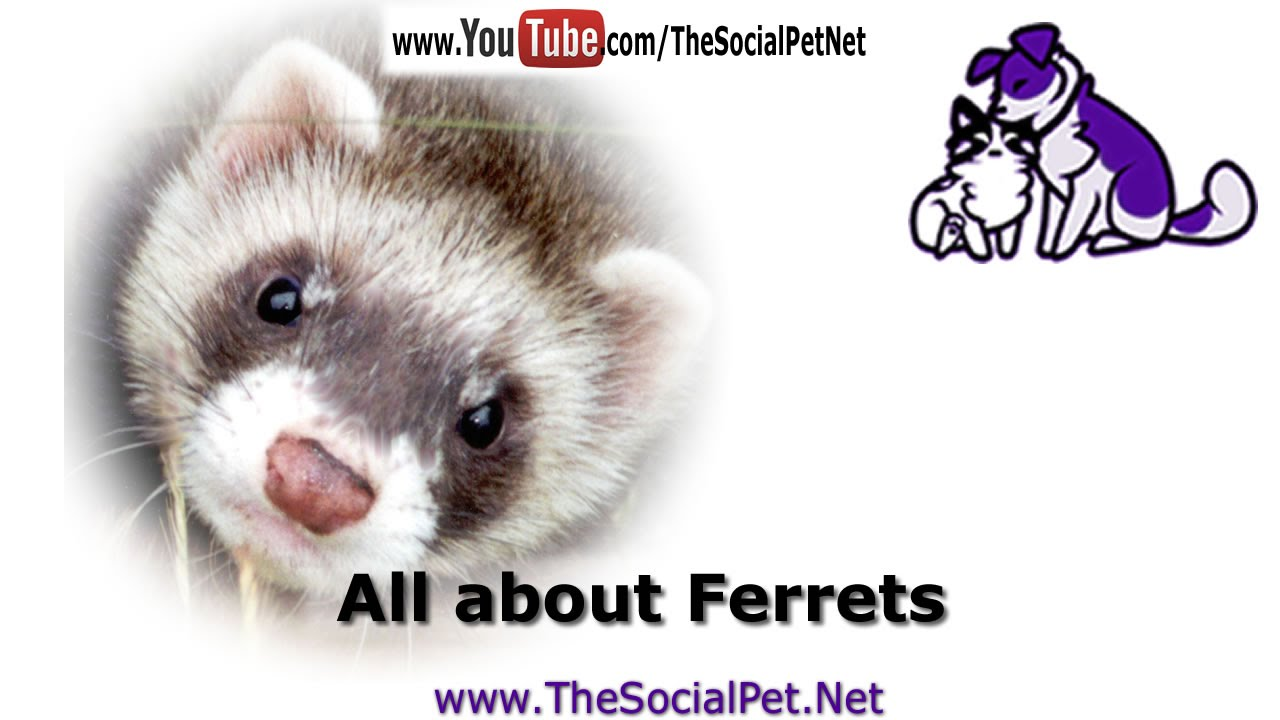 Properties big lick ferret shelter you