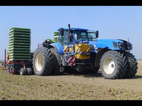 Planting Celeriac   New Holland T7.270 Trike / Ferrari Multipla 12-rij   Knolselderij planten