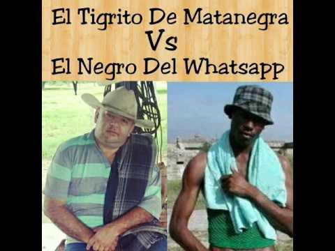 el verdadero negro de whatsapp