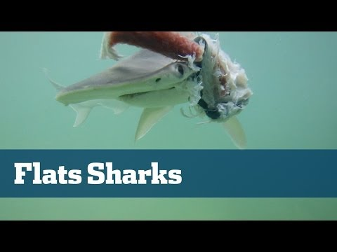 Shark Fishing On The Flats - Florida Sport Fishing TV
