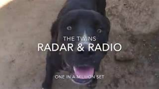 MUST SEE TWIN DOGS