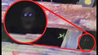 The 10 Most Mysterious Creatures Caught on Tape