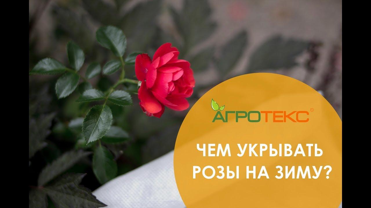 . Укрытия роз на зиму. Укрывной материал и укрытия для роз зимой. Купить укрытие для роз с доставкой в нашем магазине. Горячие денечки в.