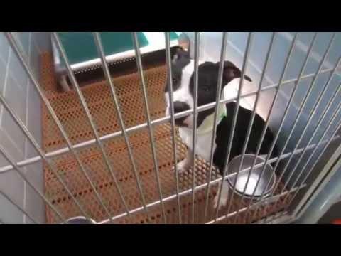 02 17 2015 adoption dogs 001