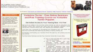 ***dog Training - How To Train Your Yorkie Not To Pee & Poop In Your House