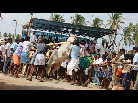 Rekla race at aathivalasu || Digital slow motion