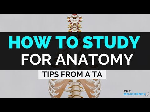 3 Ways To Better Study For Anatomy in Medical School