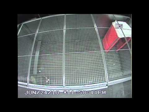Police CCTV Footage of G20 Detention Center for the public record Part 2/6