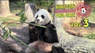 ようやくスミソニアン国立動物園に着いた藤岡。広い運動場で遊ぶパンダ...