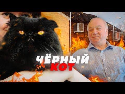 КОТ НЭШ БУДЕТ СНИТЬСЯ ВАМ В КОШМАРАХ // ТРЕЙЛЕР