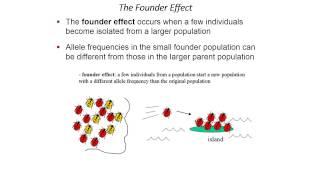 Ch. 23 Population Genetics Lecture Part 3