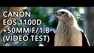 Canon EOS 1100D (Rebel T3) 50mm f/1.8 Lens. Video Test + Quick Lens Review.(This camera only provides lockable automatic exposure in Movie Mode. Ever wondered what kind of videos you can produce with a 50mm f/1.8 lens (aka the ..., 2012-06-04T23:17:34.000Z)