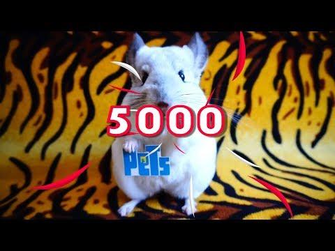 Видео: 5000 ПОДПИСЧИКОВ СПАСИБО ВАМ!!!
