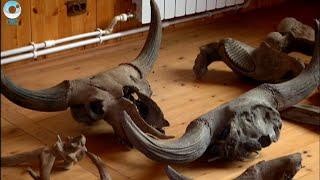 Какие животные паслись по берегам сибирских рек в доисторические времена?