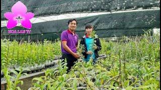 Bộ Sưu Tập LAN GIEO HẠT Vườn lan Bình Nhung ở Thanh Hóa @HOALAN 4U
