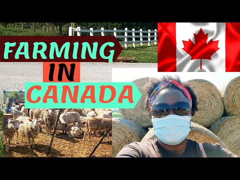 Living In CANADA /Visiting A Farm In CANADA/ Facts About CANADA