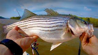 Striper Fishing on Lake Wateree