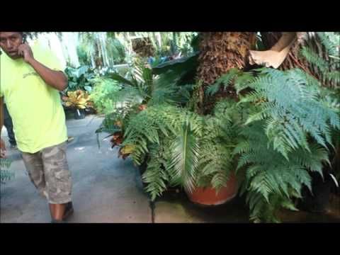 Ott's Exotic Plants Greenhouse & Nursery Tour: Schwenksville, Pennsylvania (INSIDE Part #1 of 2)