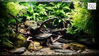 Rivers Fantasy - Aquarium 河流幻境