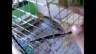 How To Build Bird Cage For Lovebird