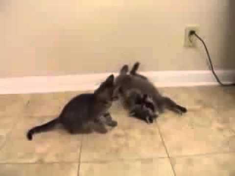 Интересное видео с животными -
