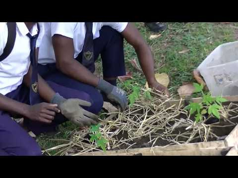 MCT Tree planting Project