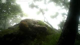 ID1554/ФГБУ Земля леопарда/Кошачьи/Хозяин заповедника Кедровая падь (2)