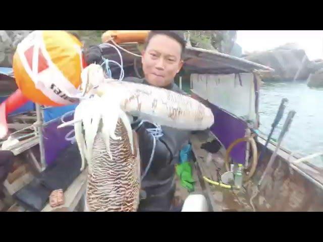 ?????????????????????????????? Krabi Spearfishing in andaman sea #2