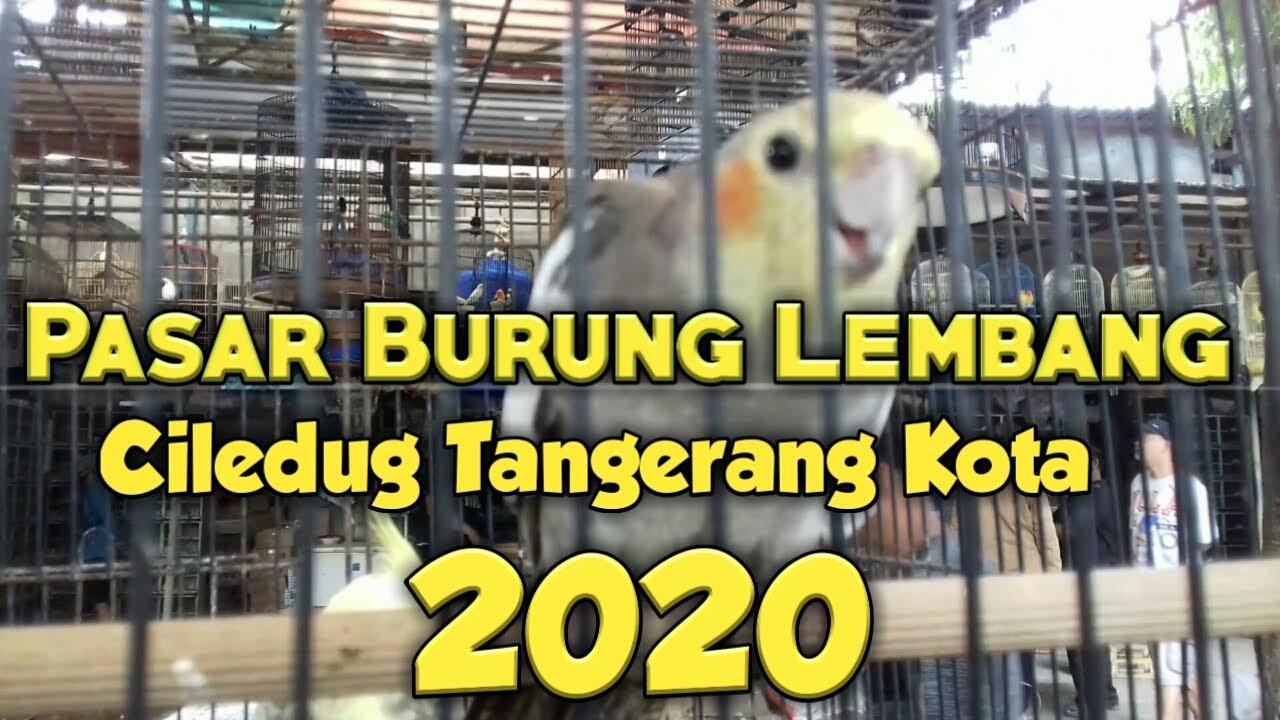 Pasar Burung Lembang Ciledug Tangerang Kota Youtube