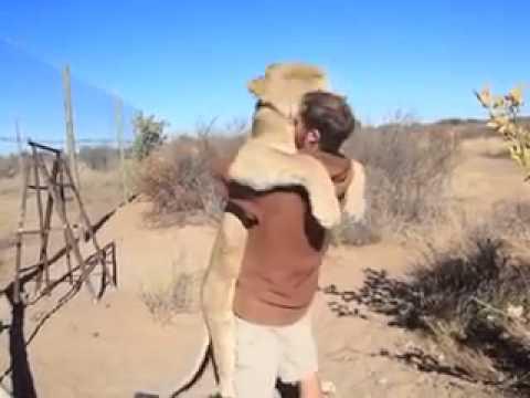 Prietenia dintre un barbat si un leu