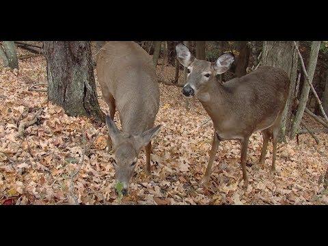 Ohio - Deer Friendly Cwd Map Ohio Tuscarawas County on