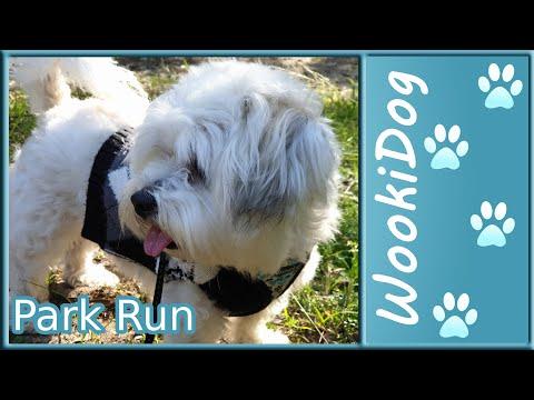 Maltese Dog walking video - Shih tzu WookiDog Park adventure (4K)