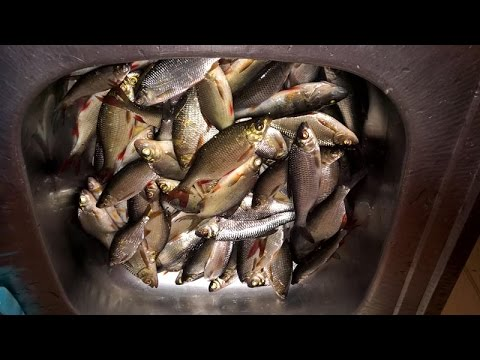 селигер рыбалка в начале мая