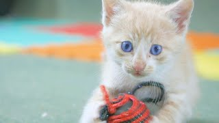 Little Kittens Playing So Cute | Four Little Warriors