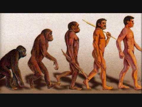 ape til menneske