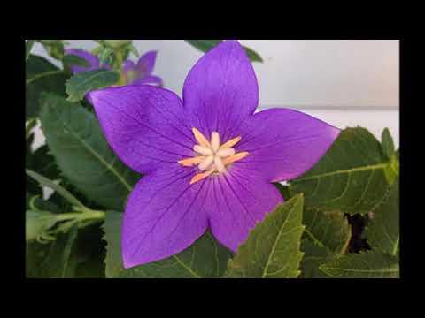 Rejuvenation: Hearing about Healing; Flower Power