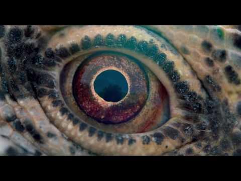Путешествие времени (Документальный/ США/ 16+/ в кино с 30 марта 2017 года)