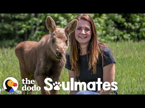 A Baby Moose Adopted This Woman as Her Mom   The Dodo Soulmates
