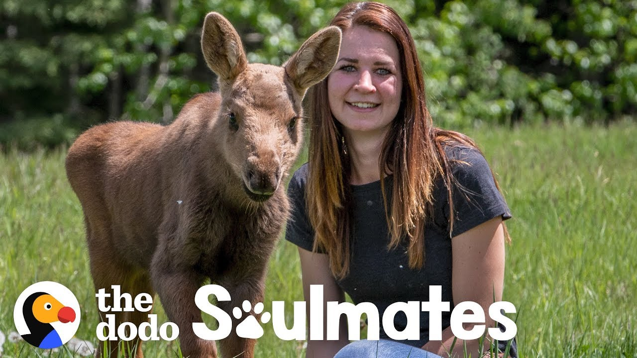 A Baby Moose Adopted This Woman as Her Mom | The Dodo Soulmates (MIRRORED)