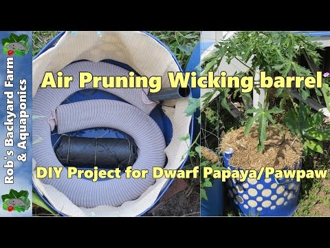 What Is Air Pruning Can It Really Improve My Container