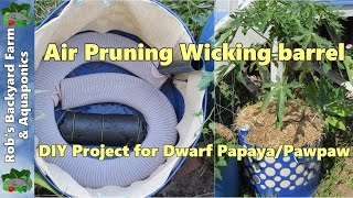 Air Pruning Self Watering/wicking Barrel, A Diy Project For Papaya/pawpaw..