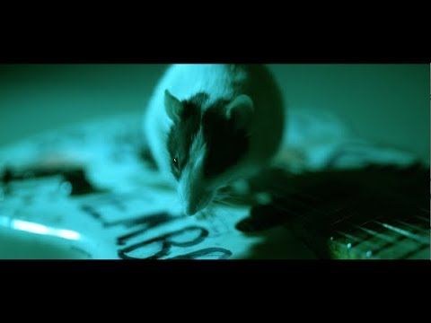 Alice In Chains - Never Fade (Official Video)