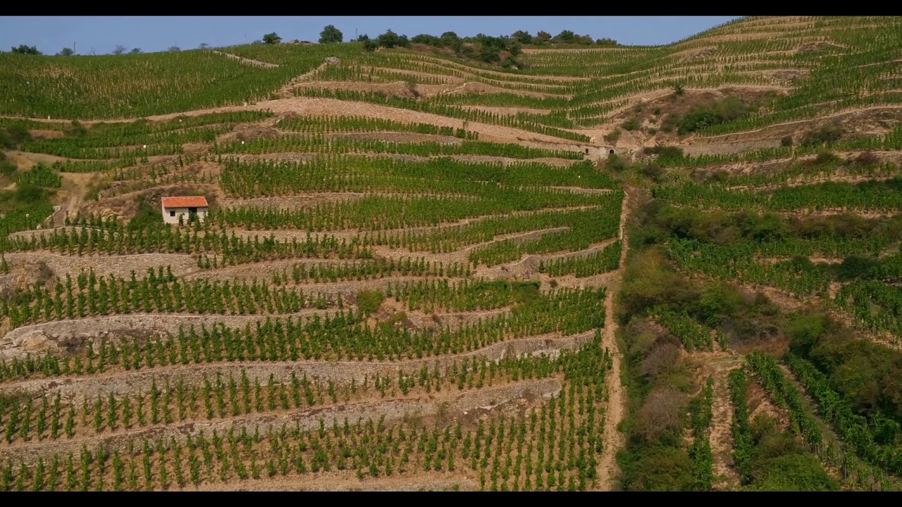 Cave A Vin Palette The Ambition To Select Plots Cave De Tain En