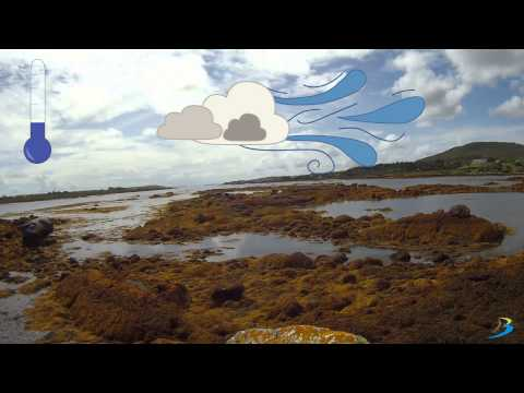 Intertidal Zone - Brandon Bioscience