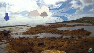 Intertidal Zone - Brandon Bioscience